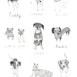Drawing dogs for Boden – Johnnie B t-shirt