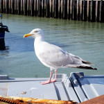 A Whitstable weekend